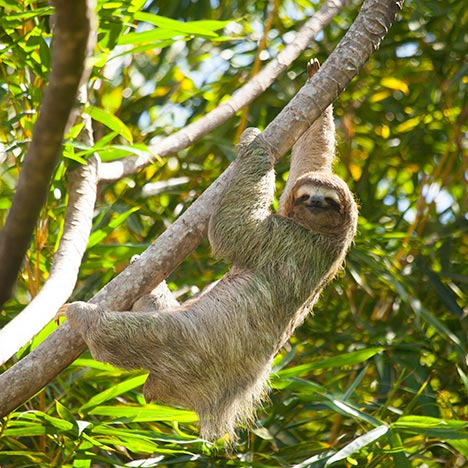 Monkey & Sloth Sightings, Right on the Resort